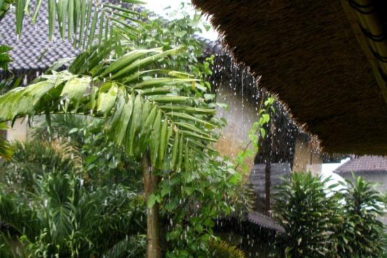 Тропический ливень в сезон дождей