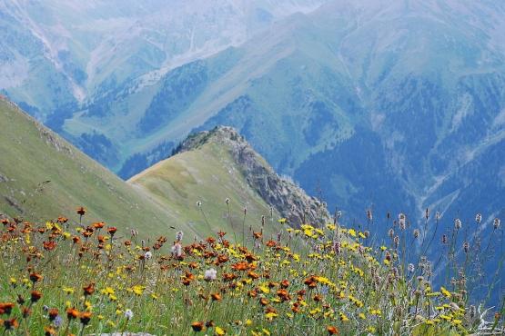 Весна в горах Казахстана