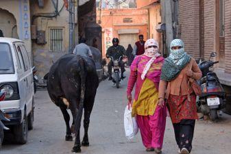 Индия фото– корова на индийской дороге