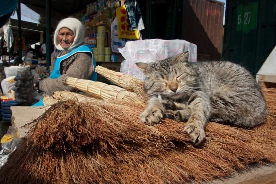 Спящий кот на рынке
