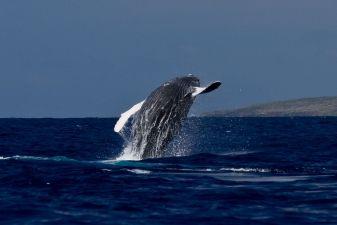 Гренландия фото – киты