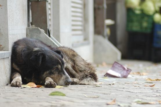 Бродячие собаки на улице