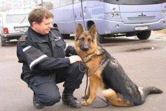 Таможенник с собакой
