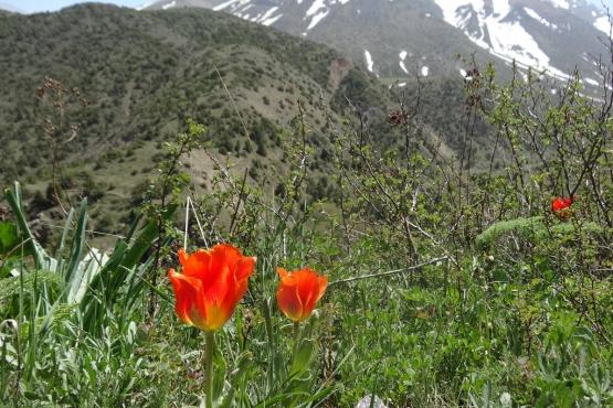 Весна в окрестностях Шымкента