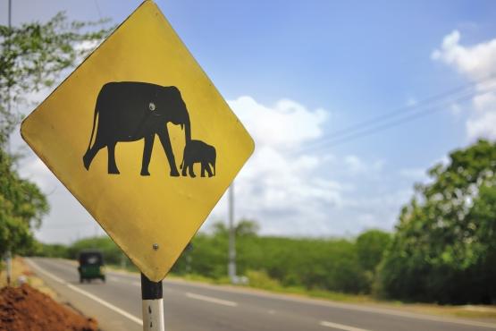 Слон– тоже участник дорожного движения