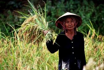 Женщина на сборе урожая