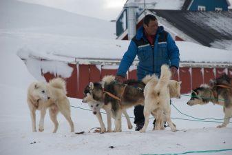 Гренландия фото – собачьи упряжки
