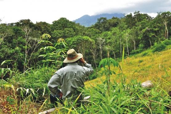 Разговаривать по сотовому посреди джунглей Борнео– почему бы и нет