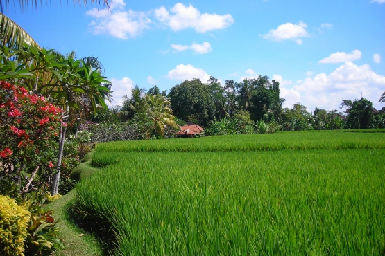 Погожий июньский день на Бали