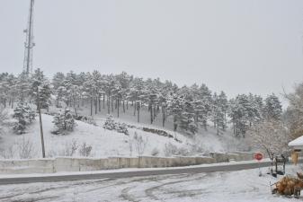Снежная зима в Батуми