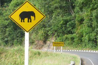 Тайланд фото – Дорожный знак «Осторожно слоны»