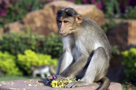 Уличная обезьяна