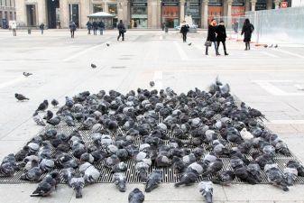 Голуби в Италии