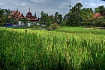 Тайланд фото – Поля в Чианг Май
