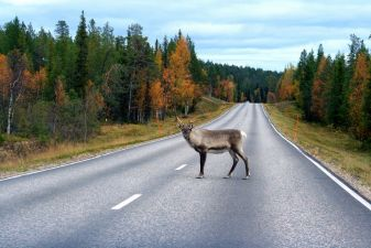Финляндия фото – Дорожная сценка в Лапландии